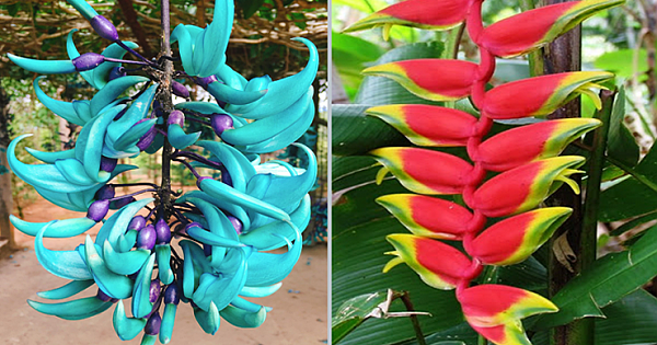 10 Incredibly Rare Flowers You Have Probably Never Seen