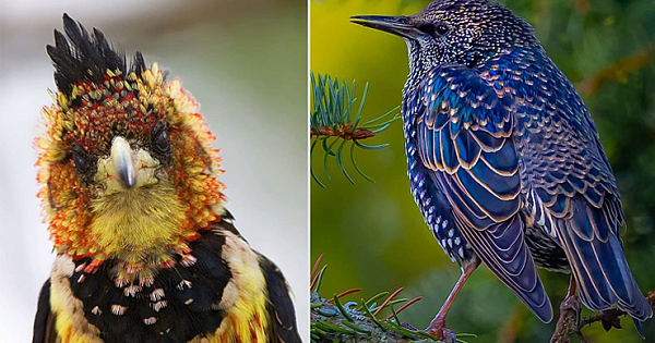 24 Extraordinarily Beautiful Birds You Might Not Have Heard About
