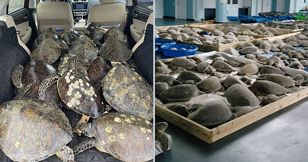 People Are Filling Their Vehicles With Sea Turtles To Save Them From The Winter Storm