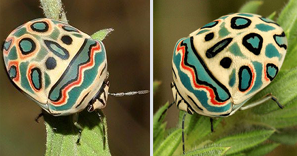 Picasso Bugs Are Like Beautiful, Stinky Works Of Art