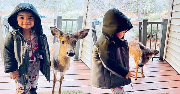 The Moment A 4-Year-Old Boy Bring Home A Baby Deer He Befriends In The Woods