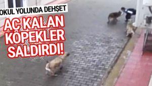 Okul yolunda dehşet! Aç kalan köpekler ilkokul öğrencisine böyle saldırdı...